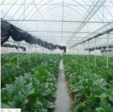 꽃 다중 경간 PC 장 녹색 집