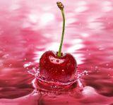 Alta calidad Natural Extracto de cereza acerola 17%