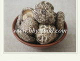 Оптовый свежий высушенный белый гриб Shiitake цветка кнопки без стержня