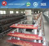 Kenia acoda la jaula del pollo de la granja (A4L160)
