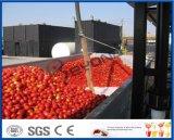 aufbereitende Zeile der Tomate