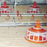 Set cheio Poultry Control Shed Equipment para Breeder House