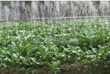 حديقة عمليّة ريّ تركيب [ت-تب] وصلة لأنّ إفريز قطر شريط و