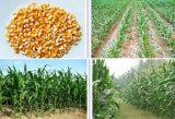 手動種取り機のための単一の列そして二重列押しのトウモロコシの種取り機