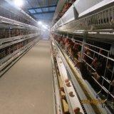Système durable et automatique de cage de ferme avicole