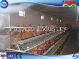 Het geprefabriceerde Huis van Poltry/van de Kip op het Landbouwbedrijf (ssw-h-006)