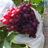 UV Behandelde Niet-geweven Zak voor de Dekking van het Fruit