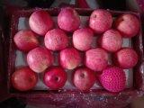 고품질 FUJI Apple (Qinguan 사과, Huaniu 사과)