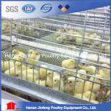 Gaiola automática limpa fácil da franga da galinha da alta qualidade