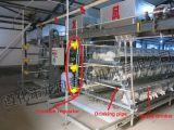 Большое Capcaity клетки слоя с ISO9001