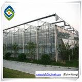Galvanisiertes Glasgewächshaus für Pfeffer