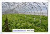 Casa verde da película hidropónica de Multispan para a morango