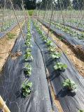 Stuoia agricola di controllo di Weed