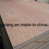 Contre-plaqué de Bintangor de qualité supérieur pour les meubles, l'emballage et la construction