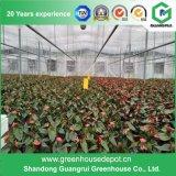 Invernadero de la película plástica para la agricultura