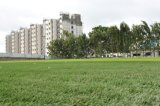 Groen Kunstmatig Gras voor het Hof van het Voetbal (W40)