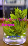 Grüner Tee (9370)
