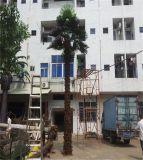 Фабрики сбывания пальма сразу искусственная