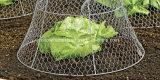 Rete metallica esagonale di Sailin per la rete fissa del pollame