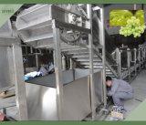 Convoyeur de légume et de fruit d'acier inoxydable du SUS 304