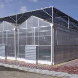 Großes Multi-Überspannung PC Gewächshaus für Gemüse