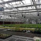 Serra di vetro agricola di Multispan di vendita