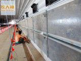 Pannello Door in Poultry House per Broiler