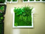 Piante e fiori artificiali della pianta succulente Gu-SD-15131