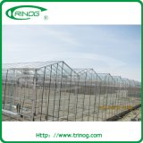 農業のためのトマトのhydroponicガラス温室