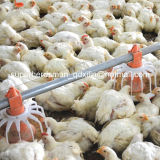 Ferme avicole chaude Equipment de Sale Automatic pour Broiler Farm