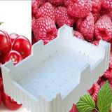 Fangyuan europäischer Standard-Frucht schachtelt Polystyren-Produktionszweig Maschine