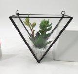 El terrario artificial del triángulo planta el modelo Potted del Succulent de las flores