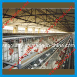 Cage d'oiseau en vente chaude vers l'Algérie et l'Afrique