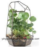 Vente en gros de terrarium en verre géométrique acrylique neuf