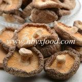Fungo di Shiitake fresco con imballaggio differente