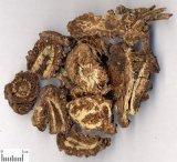 Het Poeder van het Uittreksel van de Wortel van Notopterygium van het Uittreksel van Notopterygium