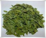 Het Natuurlijke Eucommia Blad van de fabriek Eucommia Ulmoides Oliv. Het Poeder van het Uittreksel van bladeren