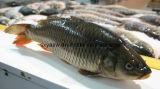 ブタ/ウシ/魚90% 95%のコラーゲン