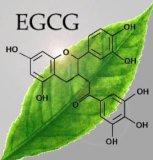 酸化防止剤の茶ポリフェノール、緑茶のエキス、