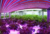 가득 차있는 스펙트럼 4FT T8 LED 플랜트는 야채 18W 22W 36W 40W 50W를 위해 가볍게 증가한다