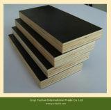 熱い販売の黒のフィルムは堅い木製のコアの合板に直面した