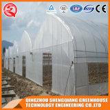 Chambre verte d'agriculture de tunnel préfabriqué de coût bas