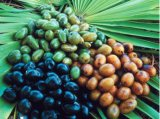남자의 건강 자연적인 지방산 15%-85%는 야자과의 일종이 추출 열매를 맺을 것을 보았다