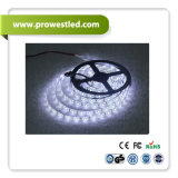 60*SMD5050/2835 LED 네온 코드 파란 LED 지구 빛
