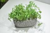 Migliori piante e fiori artificiali di vendita di Gu-SD0221 succulente