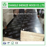 WBP Glue 18mm Printed Logo Film Faced Plywood