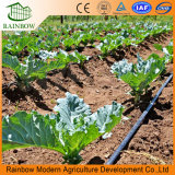 Tipo de suspensión Irrigación por aspersión para invernadero