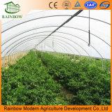 Conjunto de riego de goteo para el invernadero de la agricultura