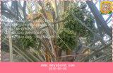Palmen-Dattel-Ineinander greifen-Beutel