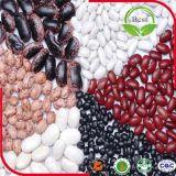 赤く白く黒い斑入りの腎臓豆